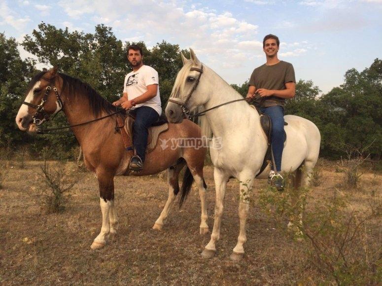 Sobre los caballos en Madrid