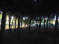 Bosque de doñana