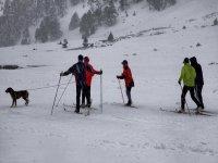 skier dog