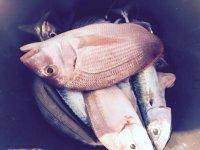 Jornadas de pesca