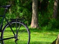 松林之间的自行车