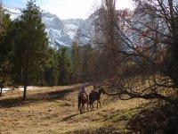 Por el Parque Natural en Lleida a caballo