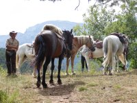 Descanso con los caballos en Lleida