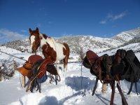 Caballos en los Pirineos nevados