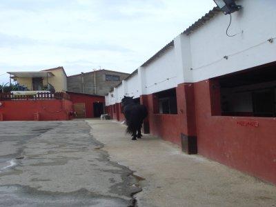 Centro Hipico Los Hermanos