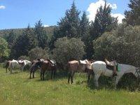 Practicar rutas a caballo en Ciudad Real