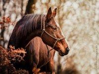 cavallo e paesaggio