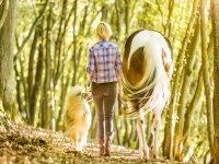 cavallo ragazza e cane