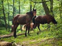 due cavalli