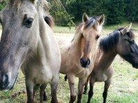 tres caballos de cerca