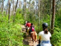 Discover beautiful horse trails