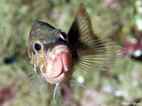 海洋动物在海下