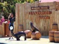 Show sea lions