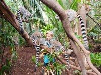 Una experiencia con lemures