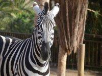 Zebras y otros animales