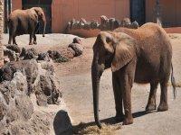 Elefantes en estado puro