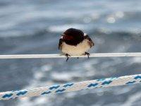 Aves en el barco