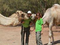 Admira los camellos