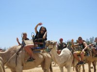 Have you ever ridden on a camel?