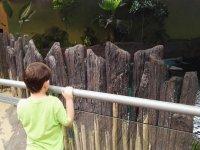 说书游览野生动物中心花键盘上