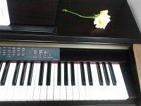 Flores sobre el teclado