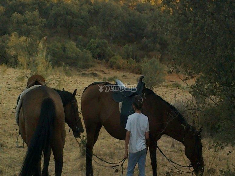 Passeggiata a cavallo attraverso il mulino