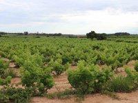 Visitando los vinedos de Tarragona