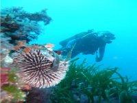 sumergido en el fondo marino
