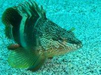 Calimera Reef