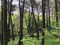 冒险电路在树上