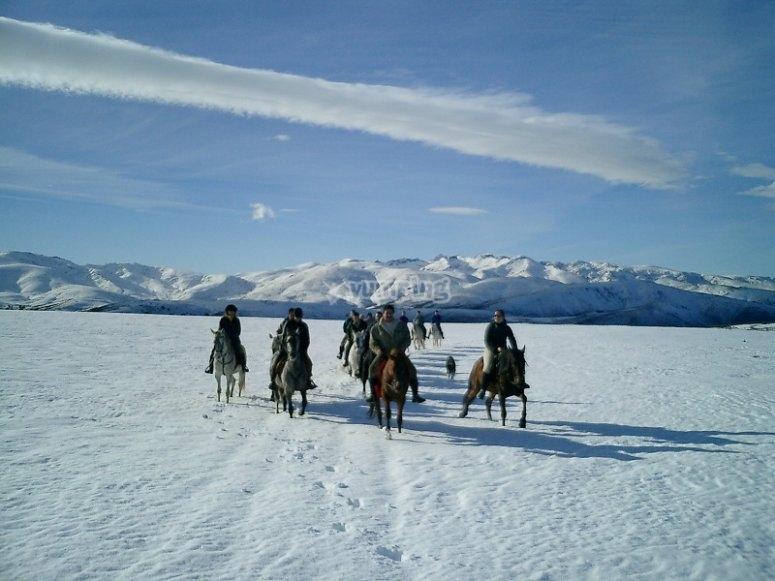 Caballos sobre la nieve de Gredos