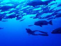 Buceo entre bancos de peces
