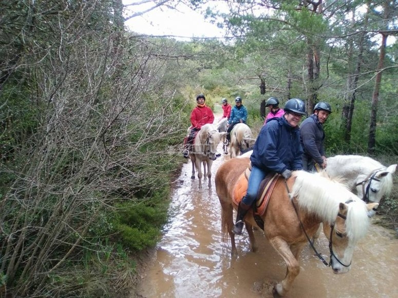 Horseback trips for all age groups