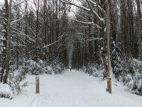Esqui de travesia en el bosque