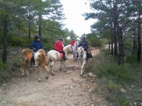 Horse riding trip in Rodonyà 1 hour