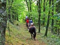 Subiendo a caballo entre los arboles
