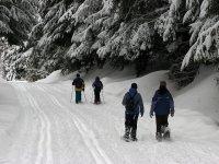 Raquetas de nieve para grupos