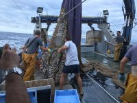 渔网上了船适航Gaviotas的
