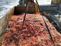 Pesca de marisco