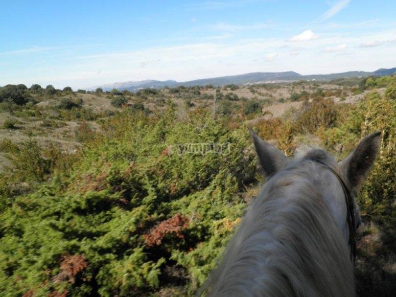 Hermoso paisaje a caballo