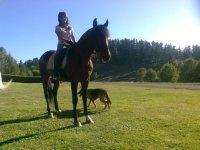 Cavallo e pastore tedeschi