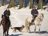 Cavalli nella neve