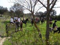 Caballos en la sierra de Badajoz