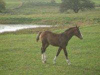 caballo a su aire