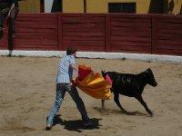 Riding a heifer