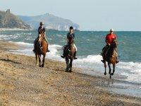 在马背上的海滩