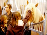 展览会--999-驴场--999-标志马