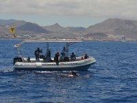 Embarcacion junto al cetaceo en Tenerife