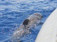 港附近鲸类海洋哺乳动物Colon