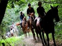 Entre los arboles verdes con los caballos